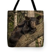 Bear In Tree Tote Bag
