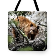 Bear In Trees Tote Bag