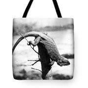 Bearded Lizard Tote Bag