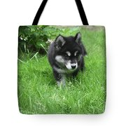 Beautiful Alusky Puppy Dog Walking Through Thick Green Grass Tote Bag