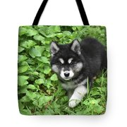 Beautiful Alusky Puppy Peaking Out Of Green Foliage Tote Bag