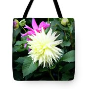 Beautiful And Fresh Dahlias In The Butchrt  Gardens,vancouver Island 2. Tote Bag
