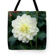 Beautiful And Fresh Dahlias In The Butchrt  Gardens,vancouver Island 3. Tote Bag