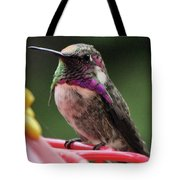 Beautiful Anna's Hummingbird On Perch Tote Bag
