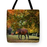 Beautiful Bay Horse In Fall Tote Bag