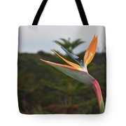 Beautiful Bird Of Paradise Flower In A Tropical Garden  Tote Bag