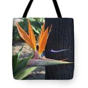 Beautiful Bird Of Paradise Flower In Full Bloom  Tote Bag