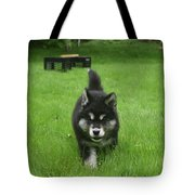 Beautiful Bold Two Month Old Alusky Puppy Dog Tote Bag