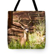 Beautiful Buck Deer In The Pike National Forest Tote Bag