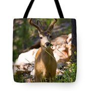 Beautiful Buck In The Pike National Forest Tote Bag
