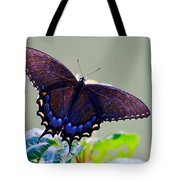 Beautiful Butterfly  Tote Bag