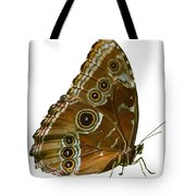 Beautiful Butterfly Wings Of Meadow Brown Isolated Tote Bag