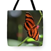 Beautiful Color Patterns To An Oak Tiger Butterfly  Tote Bag