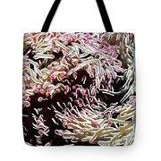 Beautiful Coral Reef  1 Tote Bag