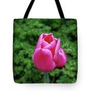 Beautiful Dark Pink Tulip Flower Blossom In A Garden Tote Bag