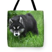 Beautiful Face Of A Black And White Alusky Puppy Tote Bag