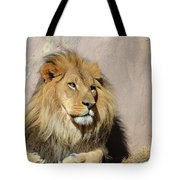 Beautiful Face Of A Lion In The Warm Sunshine Tote Bag