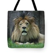 Beautiful Face Of A Male Lion With A Thick Fur Mane Tote Bag