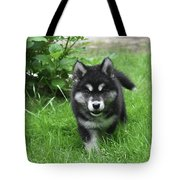 Beautiful Face Of An Alusky Puppy Dog In Thick Green Grass Tote Bag