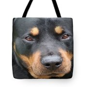 Beautiful Female Rottweiler Portrait Vector Tote Bag