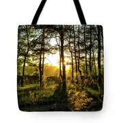 Beautiful Forest At Sunrise Tote Bag