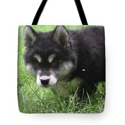 Beautiful Furry Black And White Alusky Only Two Months Old  Tote Bag