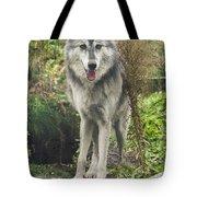 Beautiful Gray Wolf Tote Bag