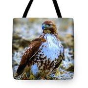 Beautiful Hawk Tote Bag