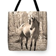 Beautiful Horse In Sepia Tote Bag by James BO  Insogna