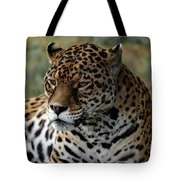 Beautiful Jaguar Portrait Tote Bag