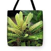 Beautiful Lime Bromeliad Tote Bag