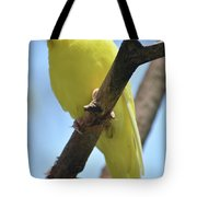 Beautiful Little Yellow Budgie Bird In Nature Tote Bag