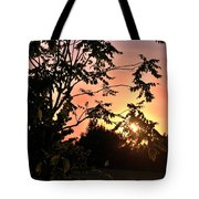 Beautiful Park Sunset View Trees Tote Bag