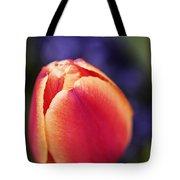 Beautiful Red And Orange Colored Tulip  Tote Bag