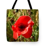 Beautiful Red Poppy Tote Bag