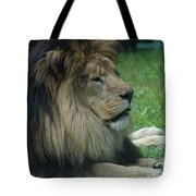 Beautiful Resting Lion In Tall Green Grass Tote Bag