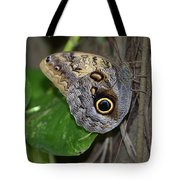Beautiful Shot Of A Brown Morpho Butterfly Resting  Tote Bag
