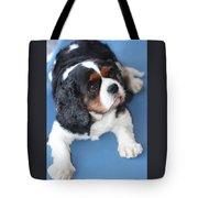 Beautiful Spaniel Tote Bag