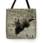 Beautiful Squirrel Standing In A Sandy Area In California Tote Bag