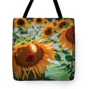 Beautiful Sunflower Field In South Carolina Tote Bag