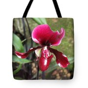 Beautiful Temptation 2 Tote Bag