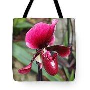 Beautiful Temptation Tote Bag