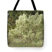 Beautiful Tree At Autumn  Tote Bag