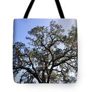 Beautiful Tree Blue Sky Sunshine Tote Bag