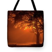 Beautiful Trees At Night With Orange Light Tote Bag