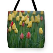 Beautiful Tulips Tote Bag