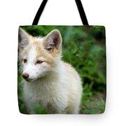 Beautiful Young Fox Portrait Tote Bag