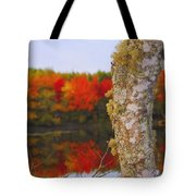 Beauty And The Birch - Nova Scotia Tote Bag