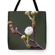Beauty In The Emerging Tote Bag
