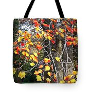 Beauty Of Fall Tote Bag